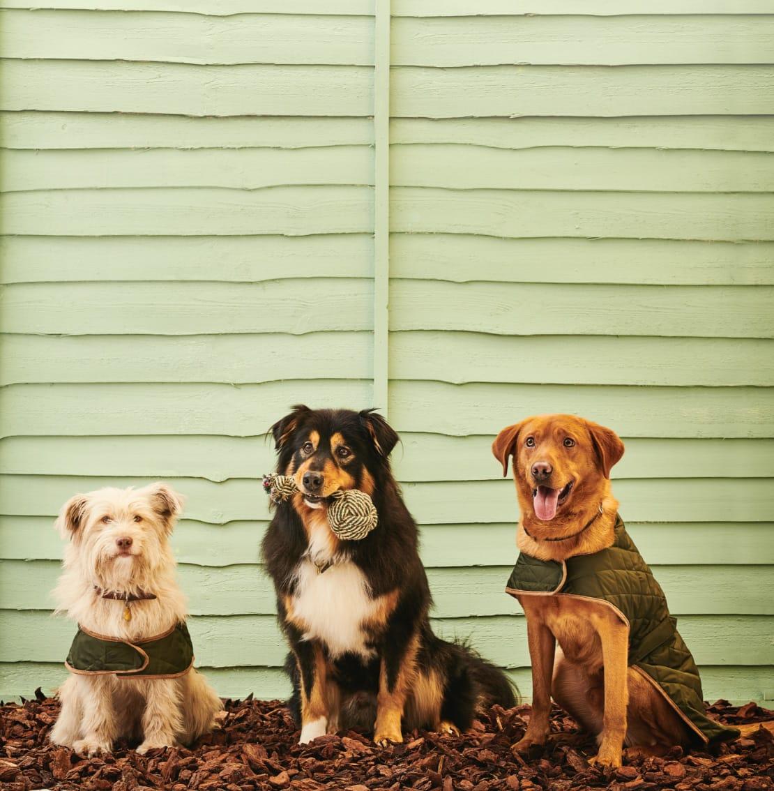 Shop Pet Accessories